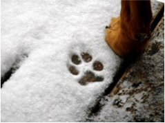 dog print in snow